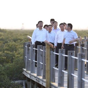 """General secretary Xi visit the Mangrove in Beihai and leave a message:"""" Well constructing the Marine biodiversity Wetland Ecological Area """""""